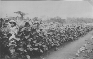 Kamerun - Bruno im Tabak